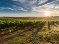 Vertical Farming – The Promising Farm of the Future