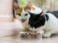 Food and Nutrition for our Pawsome Friends