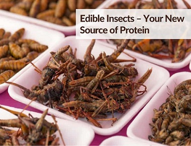 Edible Insects – Your New Source of Protein