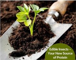 Nourish your plants with Organic Fertilizers